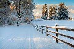 Winter Snow Scene in the Pacific Northwest
