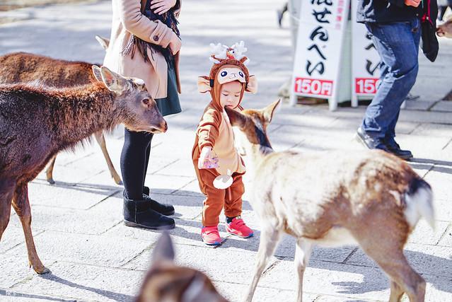 十年,京都四季 | 卷五 | 京都與我,有時還有關西 | 27