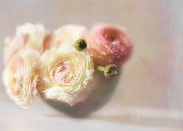 Ranunculus i bowl
