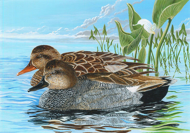 Entry #196 is a painting of a pair of gadwalls, one of the 5 eligible species for the 2017 Federal Duck Stamp Art Contest. Credit USFWS.