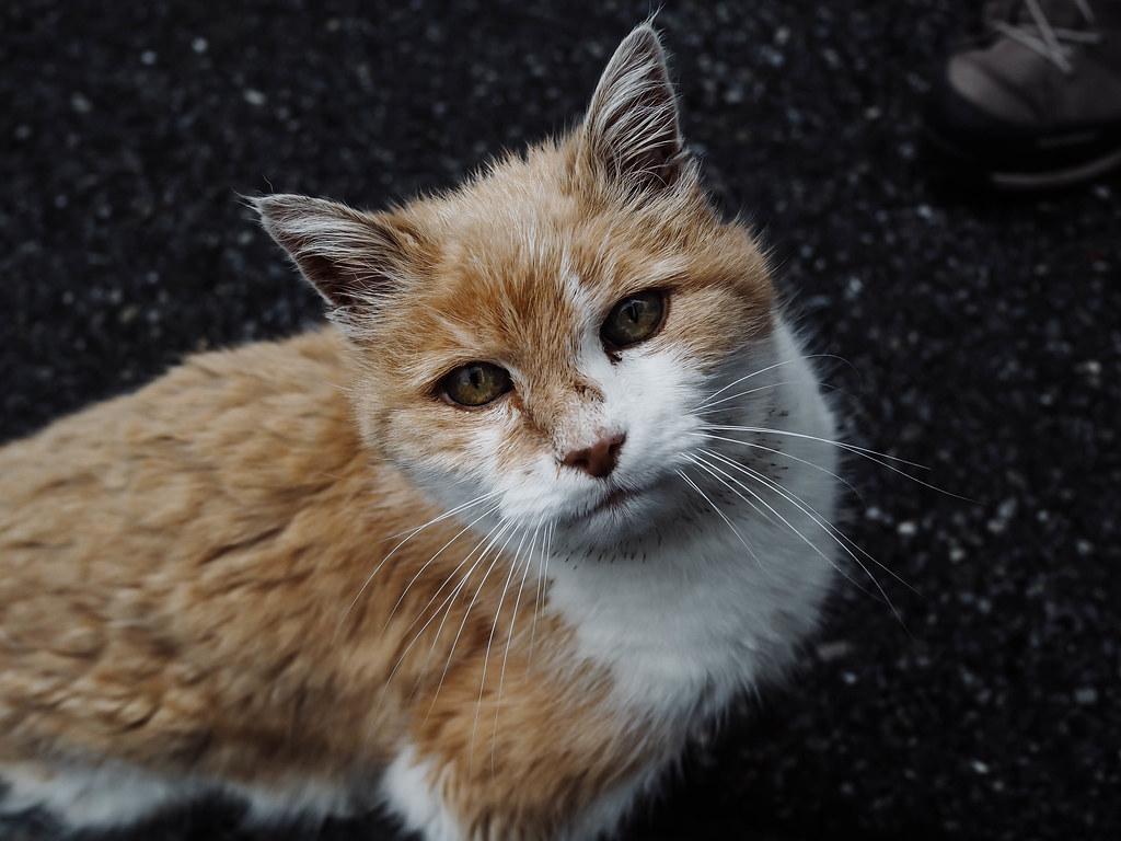zermatt cat