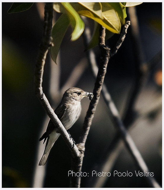 Uccellino, Canon EOS 30D, Canon EF 70-200mm f/2.8 L