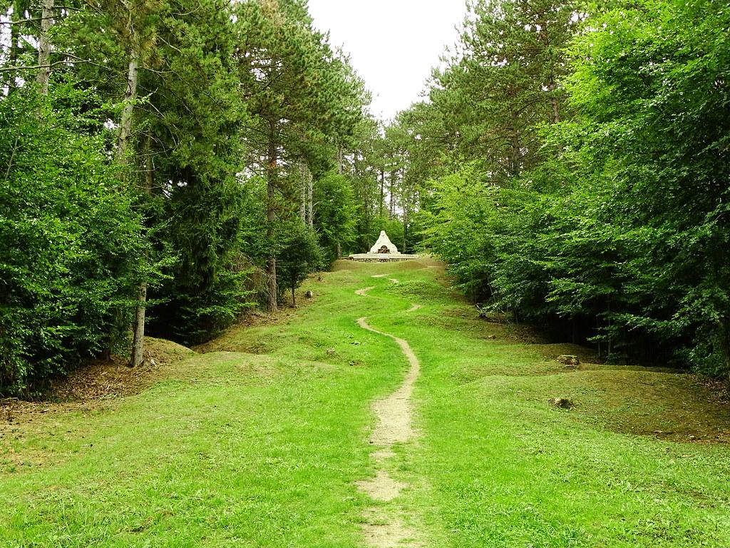 Bois De La Saulx photo saulx-les-champlon : photos pictures saulx-lès