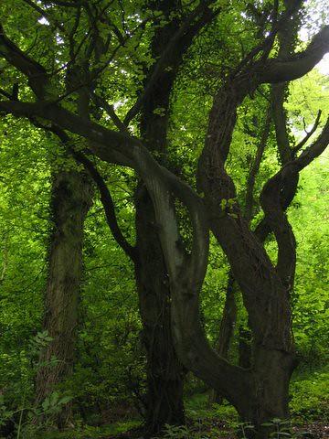 39 threetrees