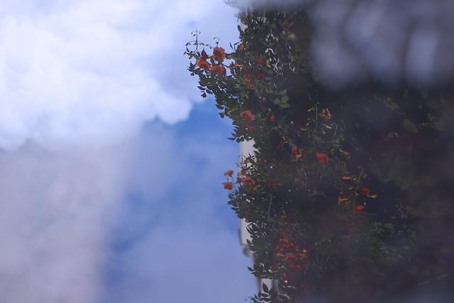 반사된 꽃