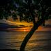 -Good Night Maui