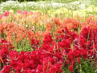 昭和の森 1 花々 04