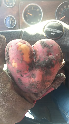 Heart shaped potato!