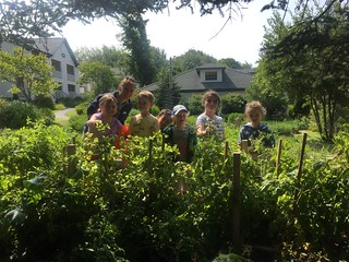 Lighthouse camp in the kitchen garden.