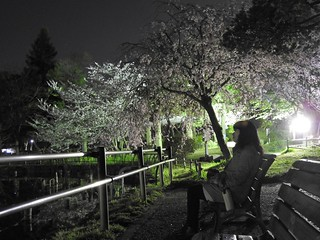 千葉公園綿打池 夜桜ライトアップ05