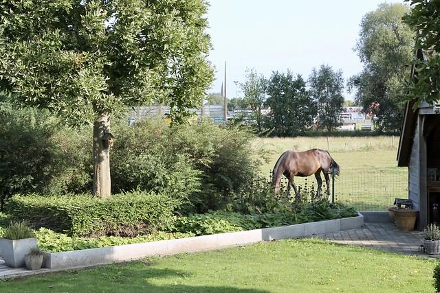 Tuin uitzicht paard