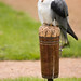 International Birds of Prey Centre (3)