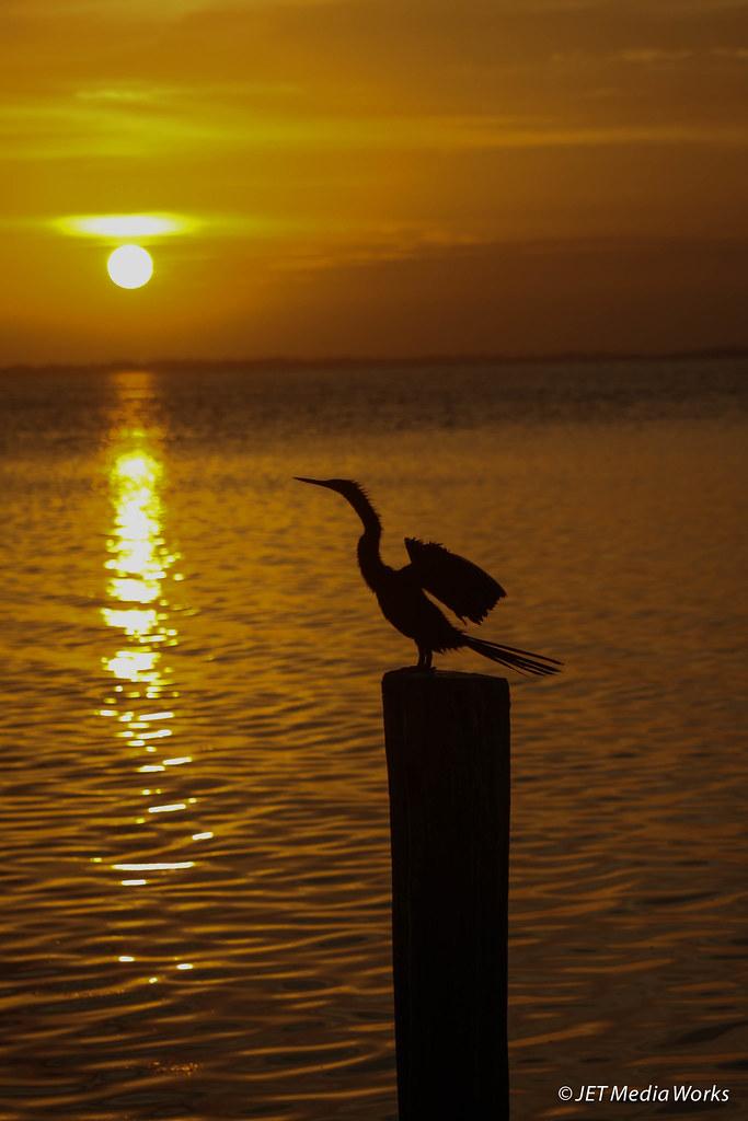 Anhinga Sunset