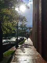 Sun after rain, sidewalk on P Street NW near Rock Creek, Washington, D.C.