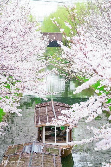 十年,京都四季 | 卷四 | 那兒春色滿城 | 09