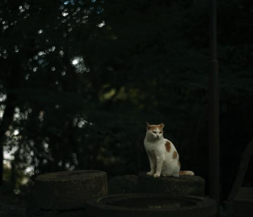cat. day 2