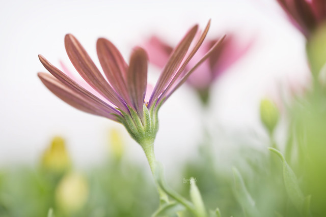Last Blooms (Explored 9/17/17)