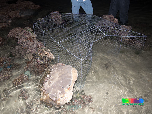 Large fish trap on coral reefs of Kusu Island