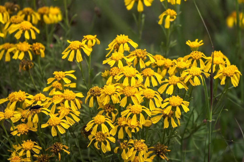 Wild-Flowers-13-7D2-081117