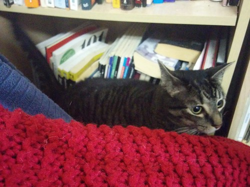 Shakespeare, by the bookcase #toronto #shakespeare #cats #caturday #catsofinstagram