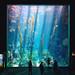 巨型海藻水族箱