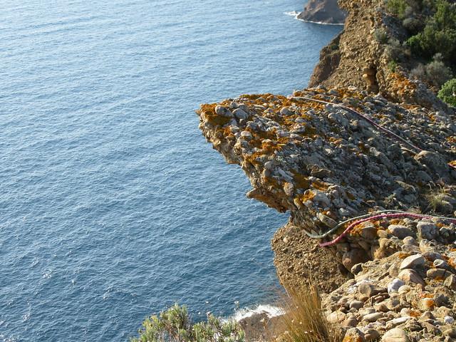 Felszacke auf dem Bec de l'Aigle