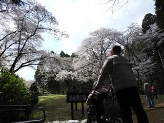 泉自然公園 06 お花見広場に到着