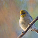 Verdin at Autumn Equinox