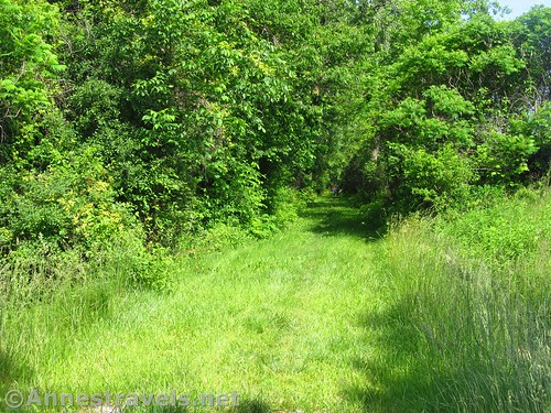 Grassy section of the Ontario Pathways Rail Trail, New York