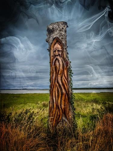 Viking tree, Ballylongford County Kerry