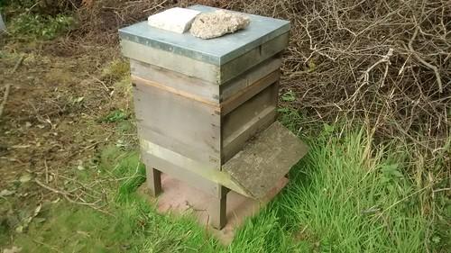 bee hive Aug 17