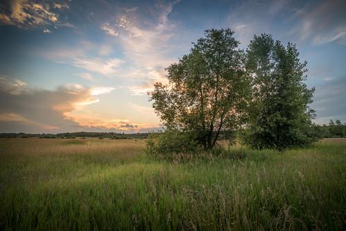 canoneos5dmarkiv atardecer sunset evening tardes twilight mi michigan midland midmichigan grass field campo clouds quiet