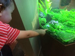 Ezra's First Zoo Trip