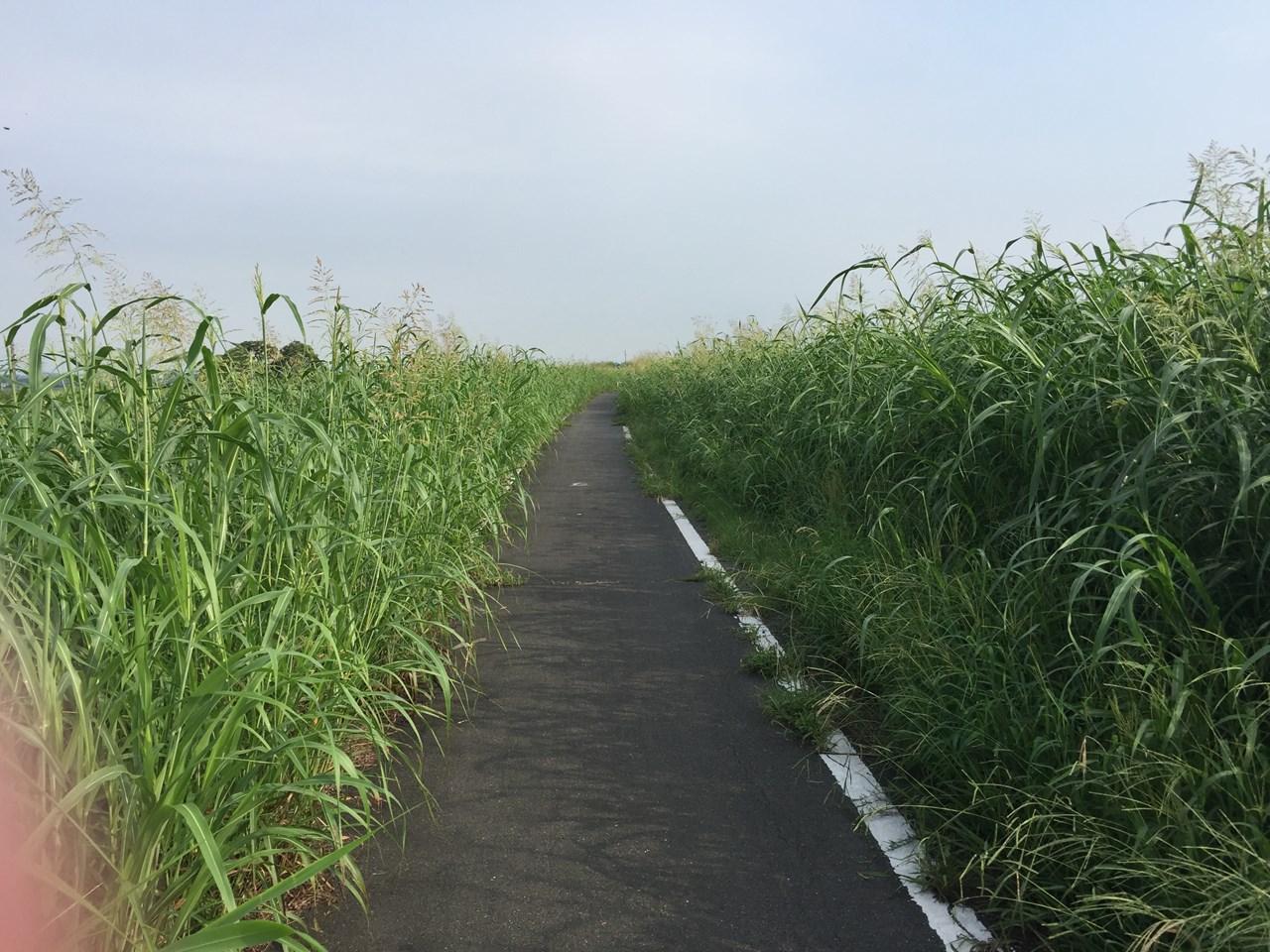 20170826_Arakawa Long Run (13)
