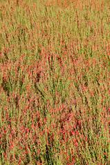 062317 Red Butte Gardens 030