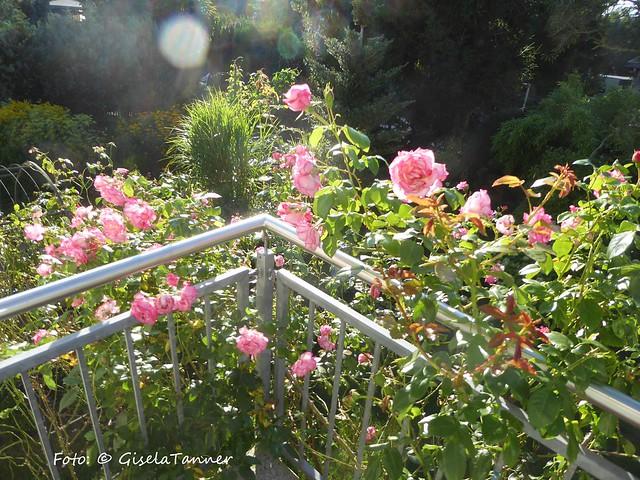 Gartenrundgang August 2017
