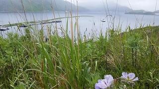 Iliuliuk Bay Unalaska