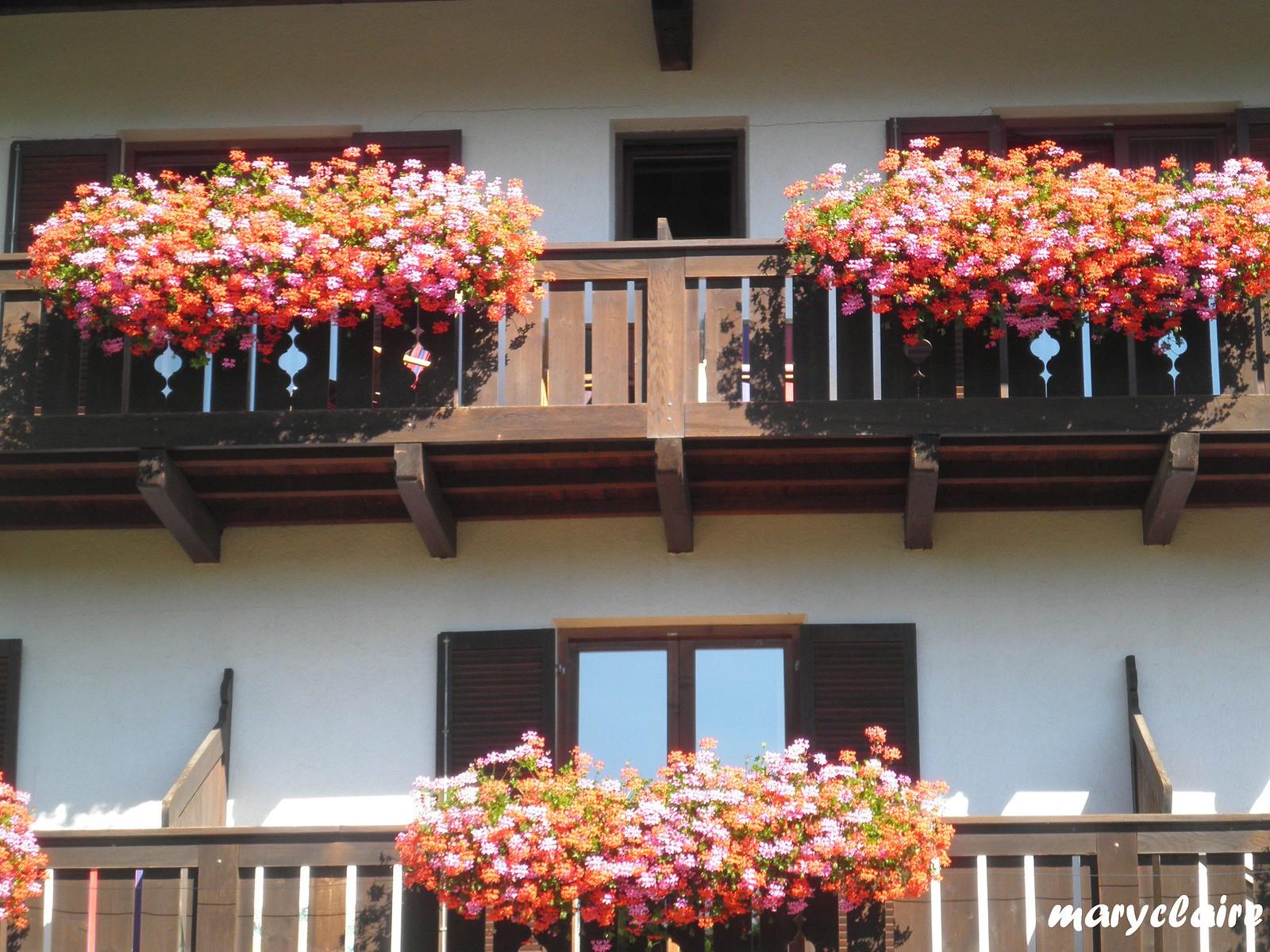 fiori di montagna1