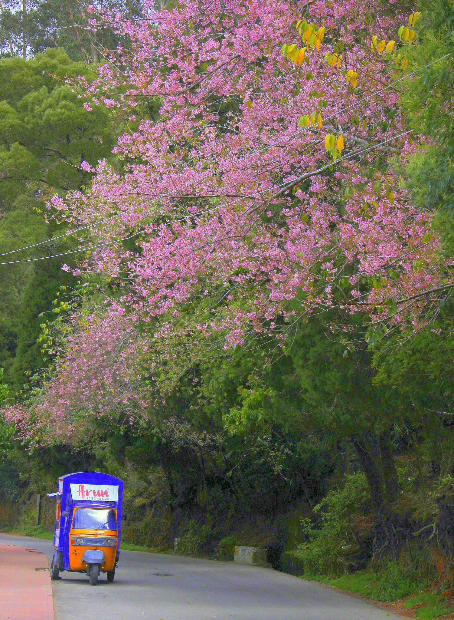 Kodaikanal in spring is full of flowers