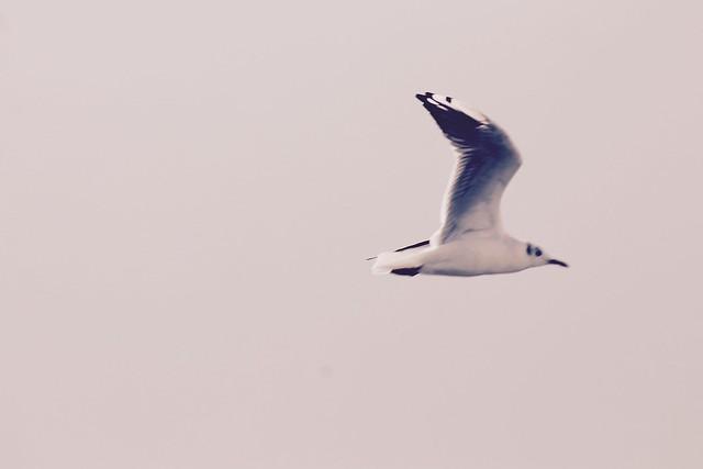 Gwen's bird photos, Canon EOS REBEL T3, Canon EF 75-300mm f/4-5.6