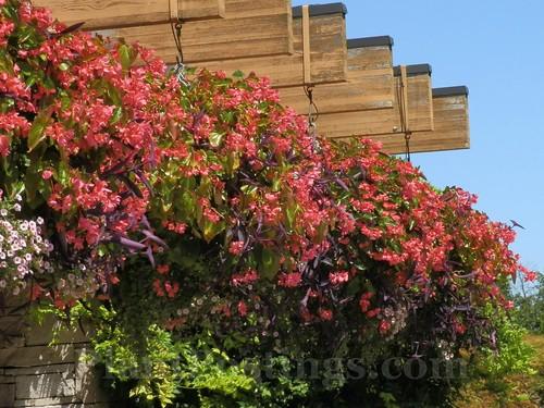 np planters