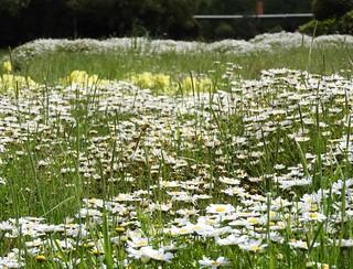 昭和の森 1 花々 06