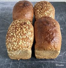 Brood met havervlokken