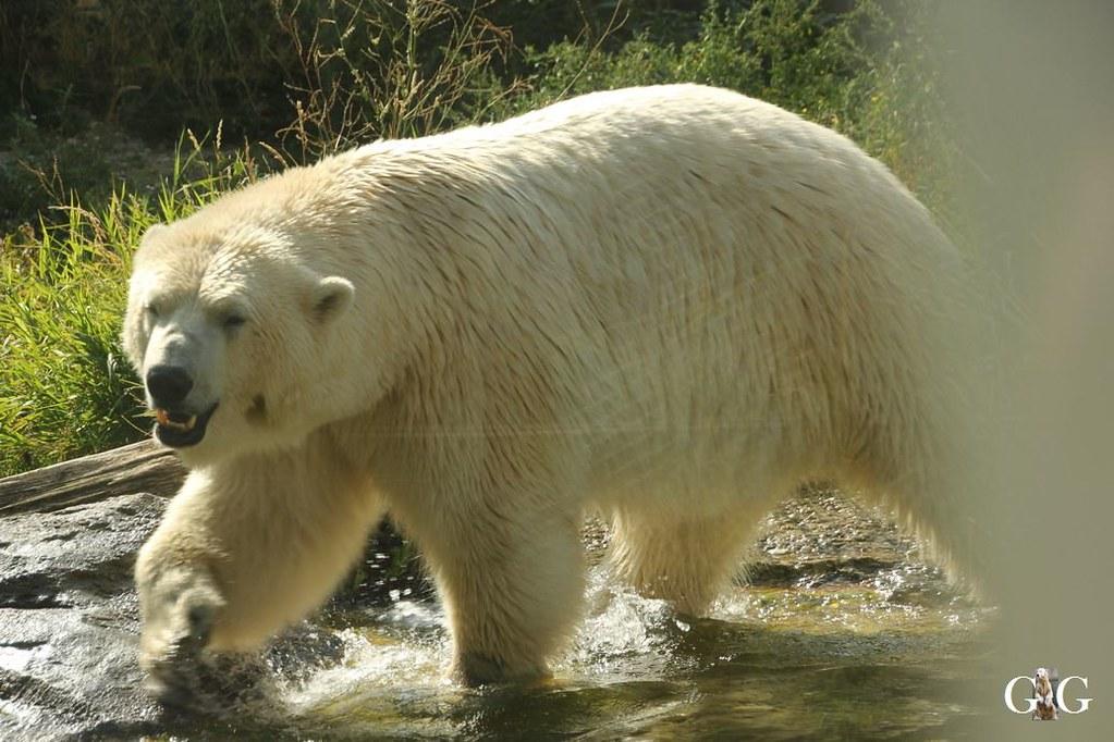Ausflug Zoo Wien 26.08.20177