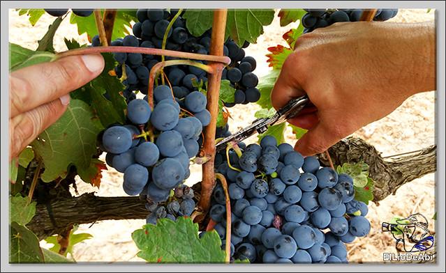 La Rioja siempre es un lugar dulce (8)