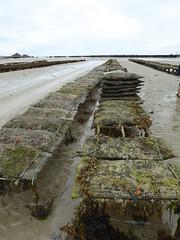 St-Cast plage des 4 Vaux (21)