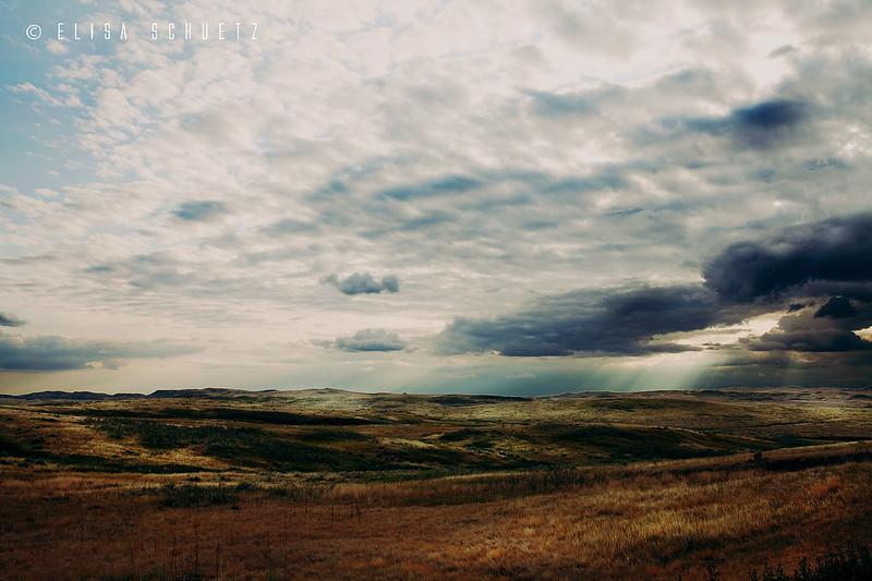 1_Grasslands_by_ems (1)