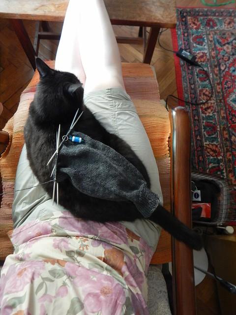 кресло, кот и рукав