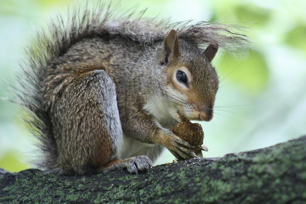 Squirrel Invasion 4