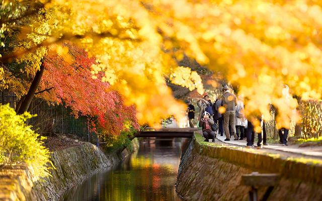Philosopher's Path, Kyoto, 哲学の道,京都